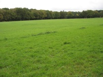 Before the new woodland was planted 2013