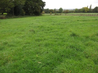 The site of the new orchard to be planted in 2014