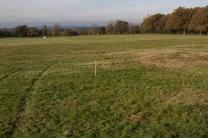 New woodland being planted Dec 2013