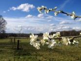 blossom-img_5588