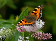 butterfly_mg_5389