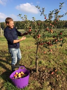 chris-picking-cider-apples-img_4818-1