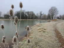 Chilly pond