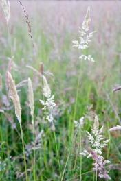 grasses_mg_4632