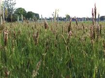 grassland-img_3979