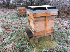 Bees hibernating