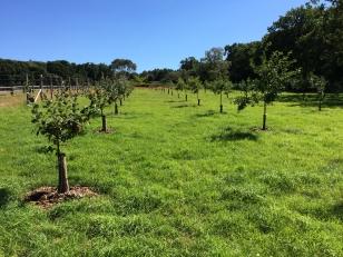 orchard-img_4422