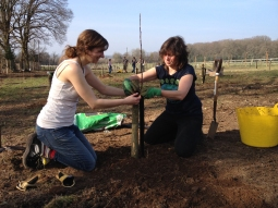 orchard-planting-img_0272