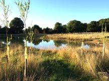 pond-img_4425