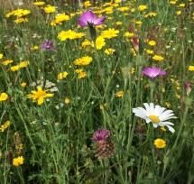 wildflowers-2-img_4349