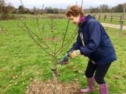 Joyce working on formative pruning