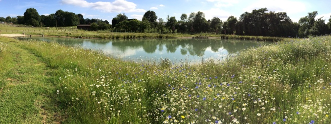 Panoramic photograph of the main pond