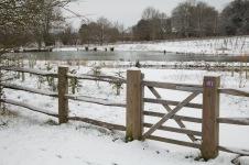 Snowy pond area