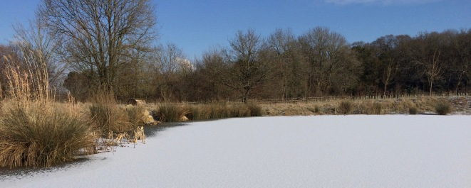 Snow on the pond