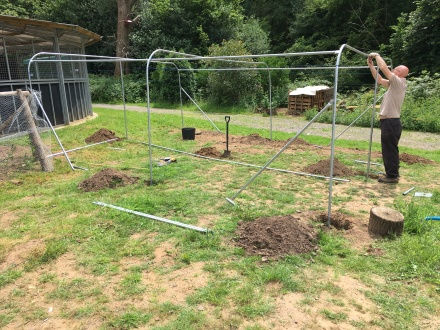 Fruit cage taking shape