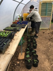 First sowings and plantings in the polytunnel
