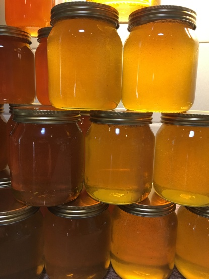 Successful crop of honey!