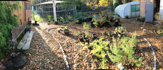 Panoramic view of the garden Nov 2018
