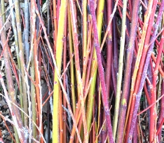 Willow colours