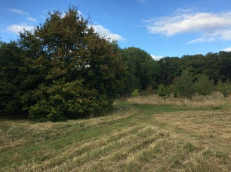 Oak Tree, meadow mown and woodland autumn 2019