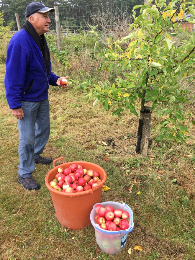 2019 Apple Harvest