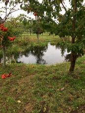 Woodland pond settling in