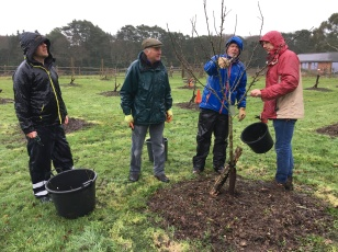 Winter orchard pruning 2019/20