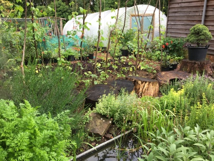 Trough pond and polytunnel June 2020